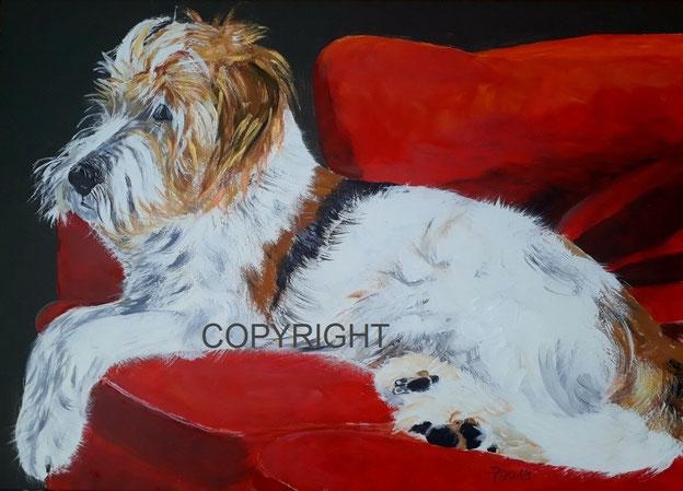 Hundeporträt: Griffonmix, tricolor, liegt auf einem roten Sofa, Tiermalerei, gemalte Tierportraits nach Fotovorlage, Tiere zeichnen lassen