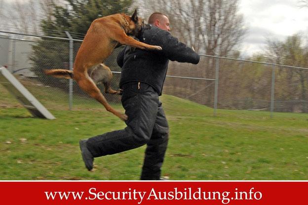 Security mit Hund