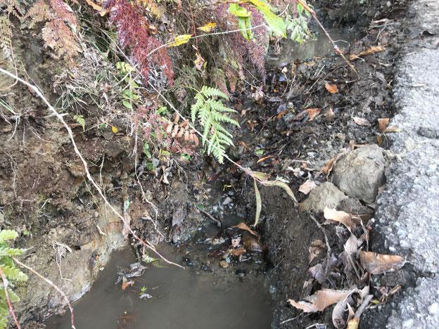 大地の再生 結の杜づくり 米沢の森 市原市 千葉県