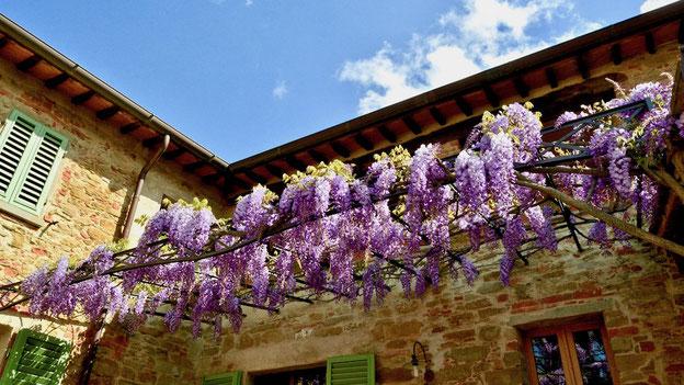 Casafredda wisteria Courtyard, Arezzo, Tuscany
