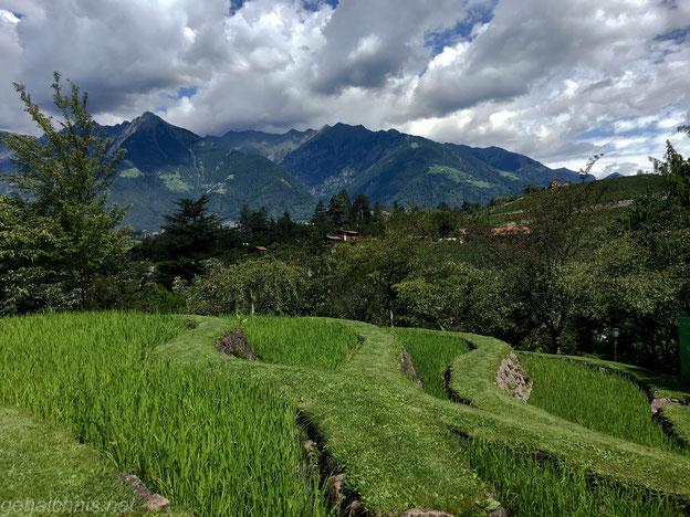 Reisfelder Asiens