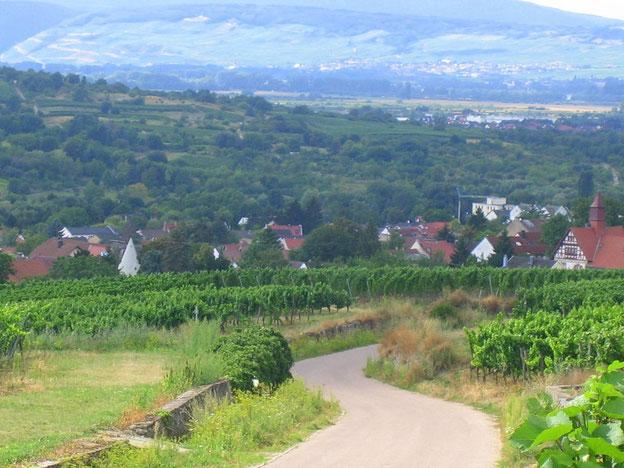 Blick nach Ober-Ingelheim und auf die andere Rheinseite. Das Niederwalddenkmal kann man am Horizont erahnen.