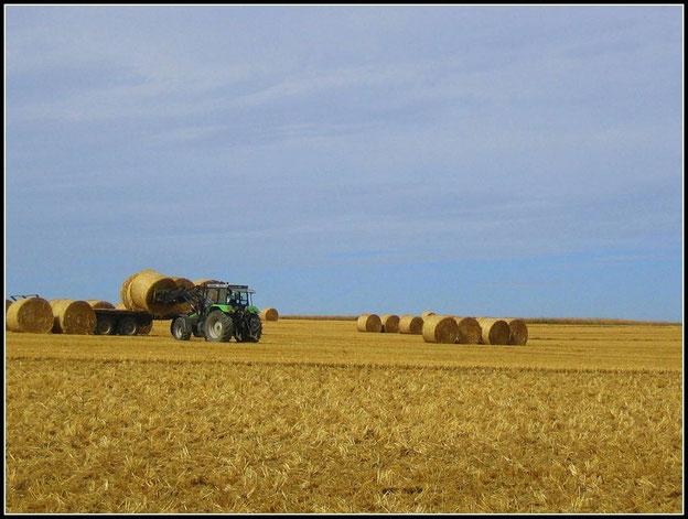 Die Hunsrücker Landwirte sind inmitten der Getreideernte.