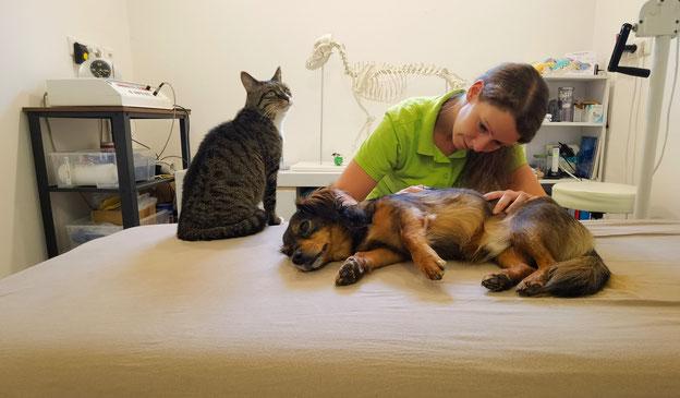 Tierphysiotherapie Hund und Katze