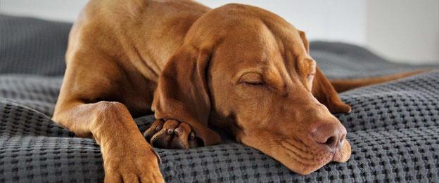 entspannter Hund; Quelle: tobalie.com