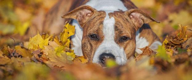 ruhiger Hund im Laub; Quelle: tobalie.com