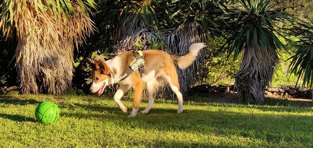 Pension chien hérault Les Pattes Libres