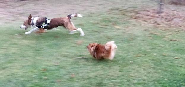 Pension canine les pattes libres Hérault