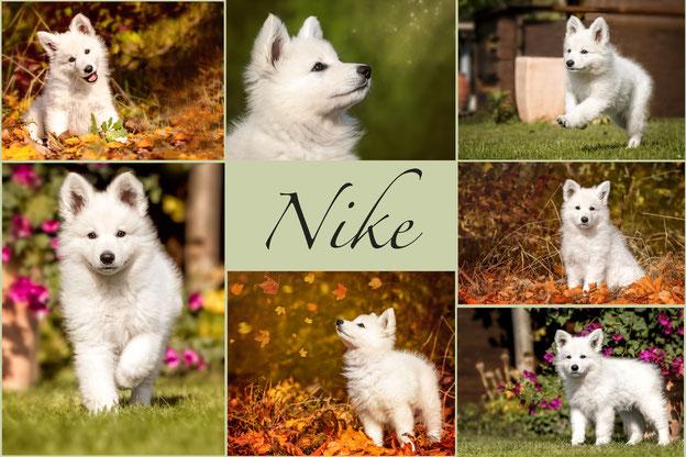 Bella-Nike vom Greif und Nesselblatt