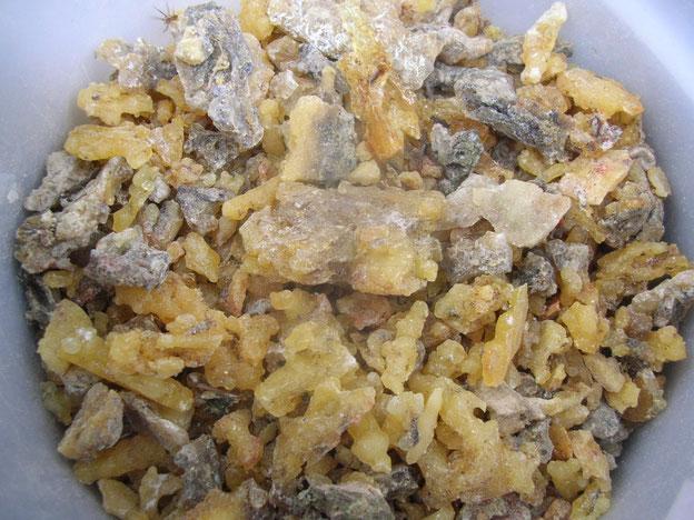 Douglasie Douglasfichte Pseudotsuga menziesii Harz sammeln douglas fir resin Räucherwerk Räuchern incense