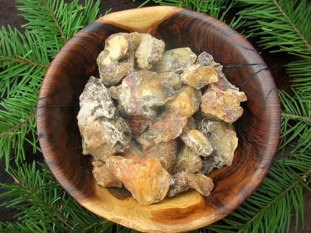 Douglasie Douglasfichte Pseudotsuga menziesii Harz gealtert sammeln douglas fir resin Räucherwerk Räuchern incense