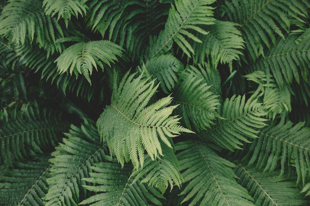 #grün #blätter #natur #schöne form