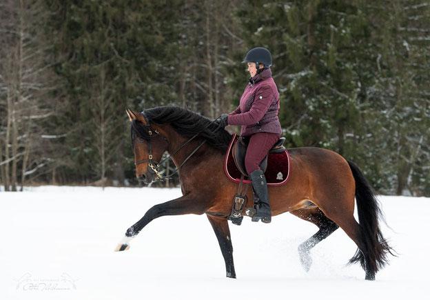 Hier ist mein zufriedener gekörter  Pre Hengst Sandokan mg v an einem wunderschönen Wintertag in einer Trabverstärkung zu sehen.