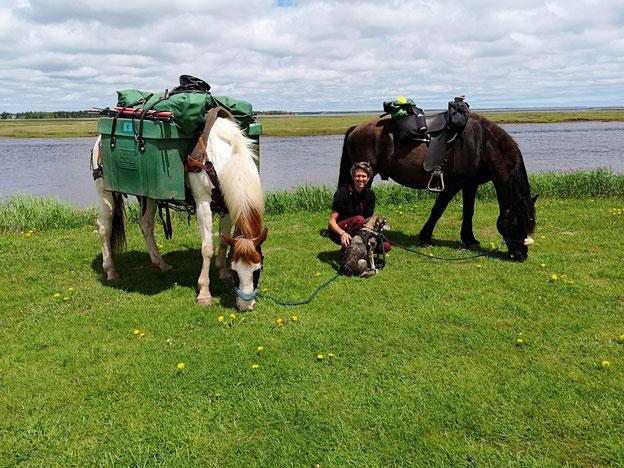 Kundin Stefanie mit ihren Canadian Horses auf einem Wanderritt über den Trans Canada Trail