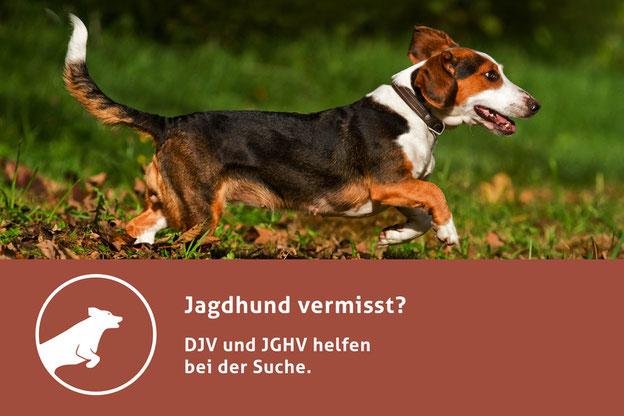 """DJV und JGHV bieten auf der Facebook-Seite """"Jagdhund vermisst"""" direkte und kompetente Hilfe. Quelle: misch-art.de/DJV"""