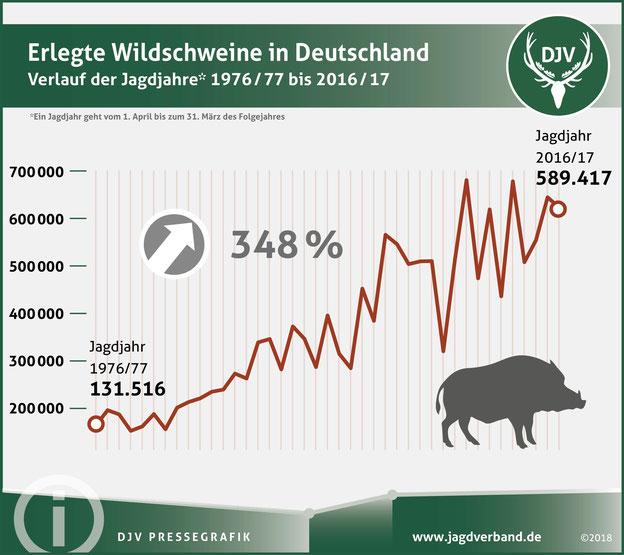 Erlegte Wildschweine in Deutschland von 1976 bis 2017. Quelle: DJV