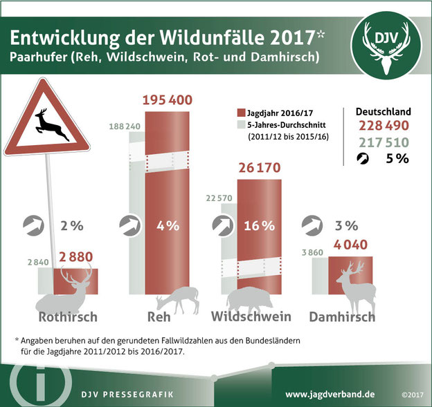 Knapp 228.500 Wildunfälle gab es im vergangenen Jagdjahr. Quelle: DJV