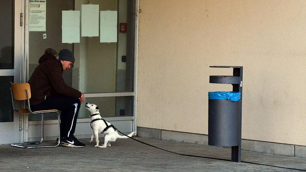 Parson Russell Terrier Yuki bei der sauberen Anzeige der Versteckperson.