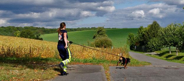 Der Appenzeller Sennenhund Aleno verfolgt zielstrebig die Spur der vermissten Person.