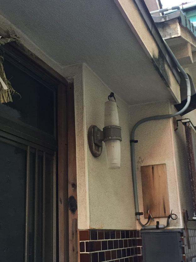 玄関の電灯にとまるツバメ