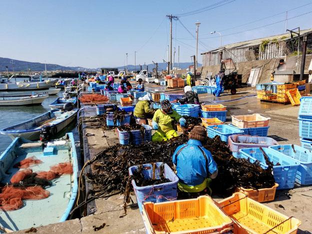 港で、一定の間隔をとって作業する人たち