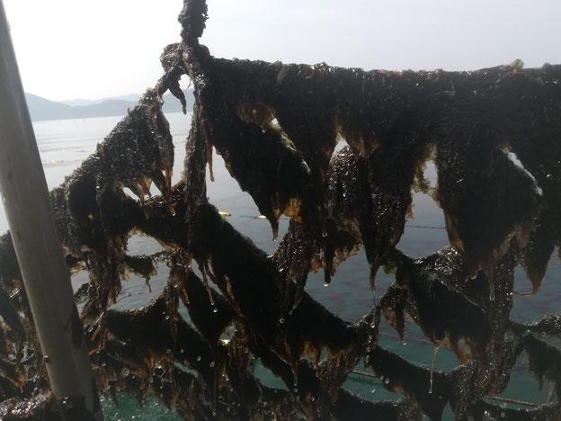 網についた黒海苔