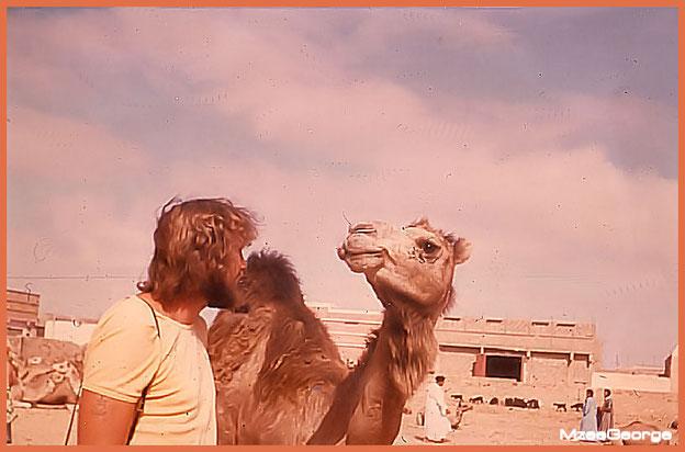 Unterhaltung zweier Kamele