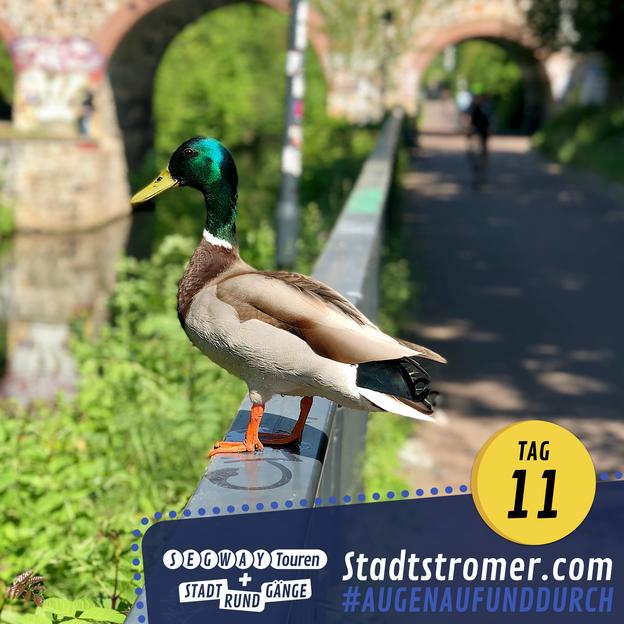 Ente auf einem Geländer am Karl-Heine-Kanal in Leipzig