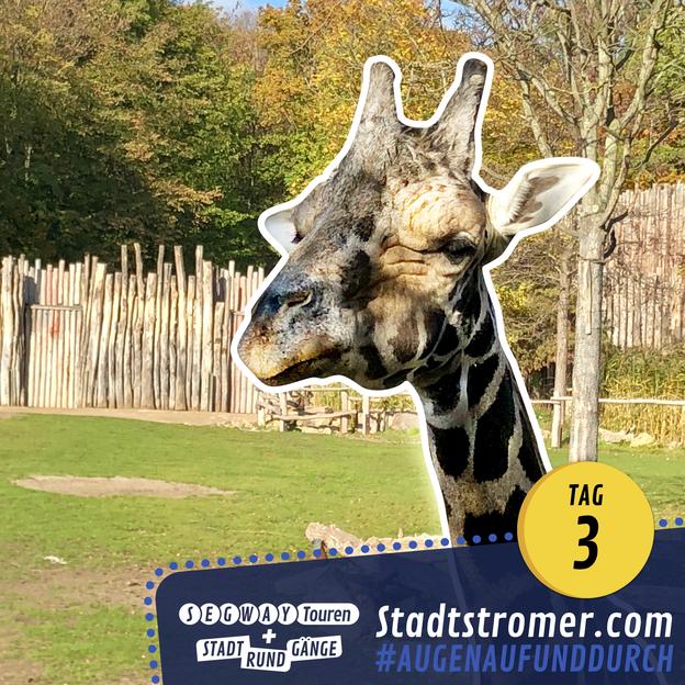 Giraffe im Zooschaufenster Leipzig