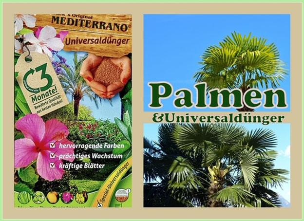 Universaldünger für Palmen