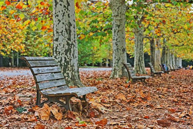 11/20新宿御苑 紅葉撮影実習を開催しました。沢山の皆さんのご参加、ありがとうございました!皆さんと楽しく、素敵な秋を沢山撮影できました~♫