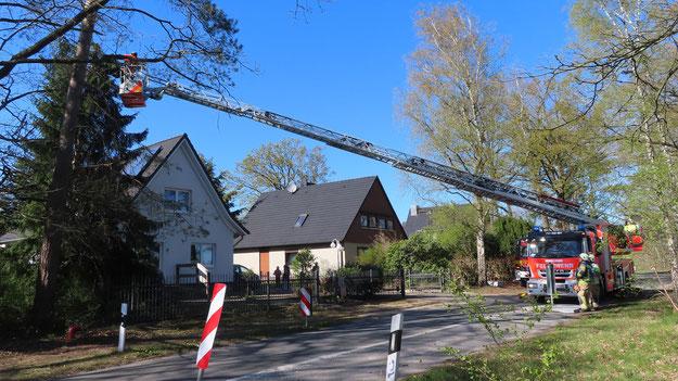 Baumfällung in der Ulzburger Straße (Foto: Quickborn1)