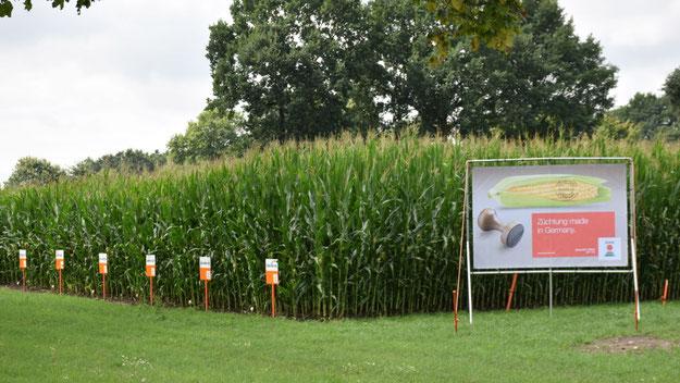 Ein Banner macht am Schaufeld auf den Betreiber KWS aufmerksam.