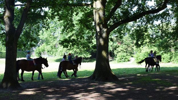 Romantisch: das Ponyreiten unter alten Bäumen.