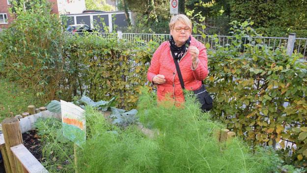 Astrid Huemke, Vorsitzende der SPD-Fraktion, machte sich ein Bild von dem Hochbeet, das mit Hilfe der bfh-Bildungs- und Förderstätte Himmelmoor gGmbH, errichtet und bepflanzt wurde. Die erste Ernte konnte bereits erfolgen.