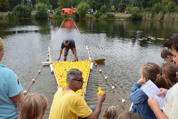 Schriftwart Klaus Wernicke treib die Enten voran, Christian Rohde nahm sie einzeln aus dem Wasser