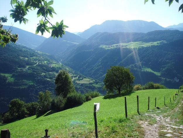 Sonnige Südtiroler Berglandschaft mit Bergwiese und Wäldern im Hintergrund