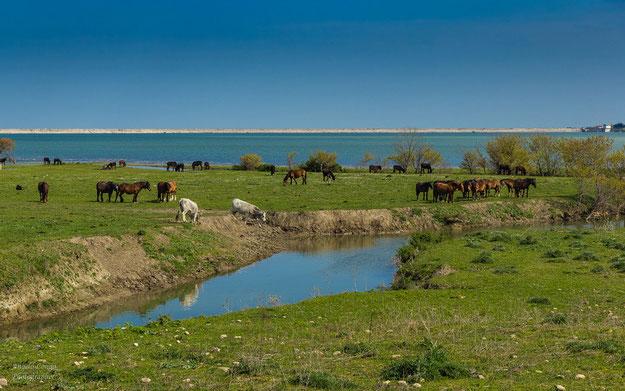 Animali al pascolo lungo le rive del lago artificiale [foto A. Longo]