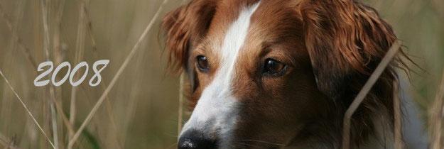 Bilder und Berichte von Bonny aus dem Jahr 2008