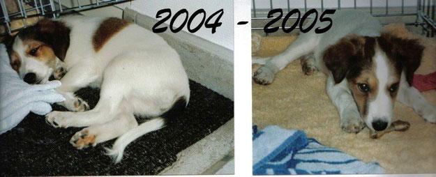 Bilder von Bonny aus den Jahren 2004-2005