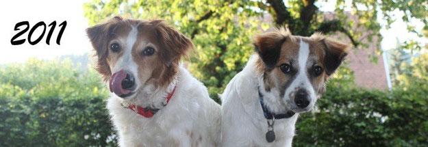 Ab diesem Jahr tritt unsere Amy in Erscheinung! Bilder und Berichte über Bonny und Amy aus dem Jahr 2011