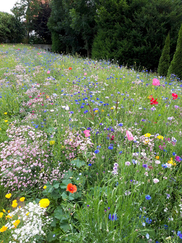 Große Blühwiese, die in allen Farben blüht