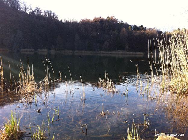 al lago di Villa ci attendono un miliardo di rane e rospi