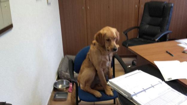 Anton als Büromitarbeiter (02.18)