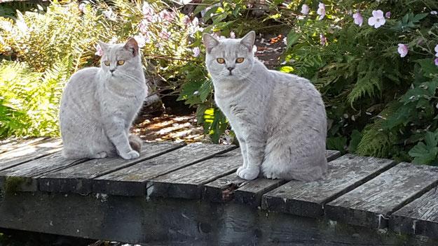 Geschwister Bagira und Balu im Garten