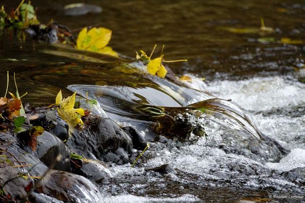 Herbst an der Nister