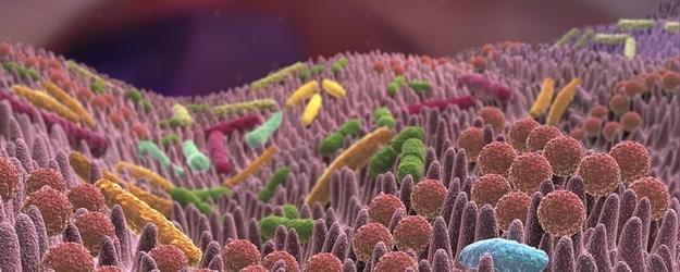 Darmflora - Antibiotika zerstören Ihre Darmbakterien