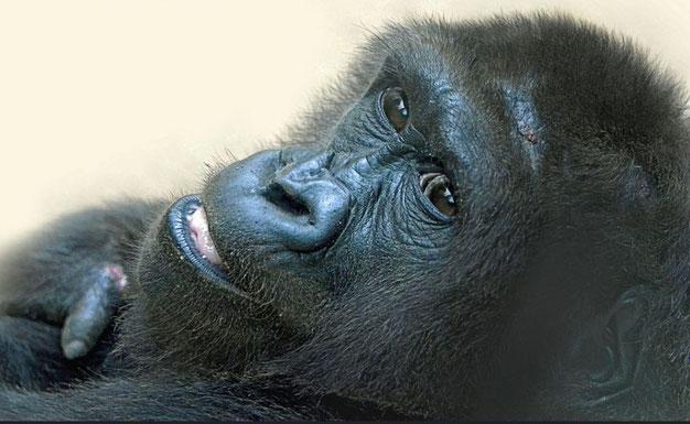 KIKI im Heidelberger Zoo / © Foto: Heike Arranz Rodriguez