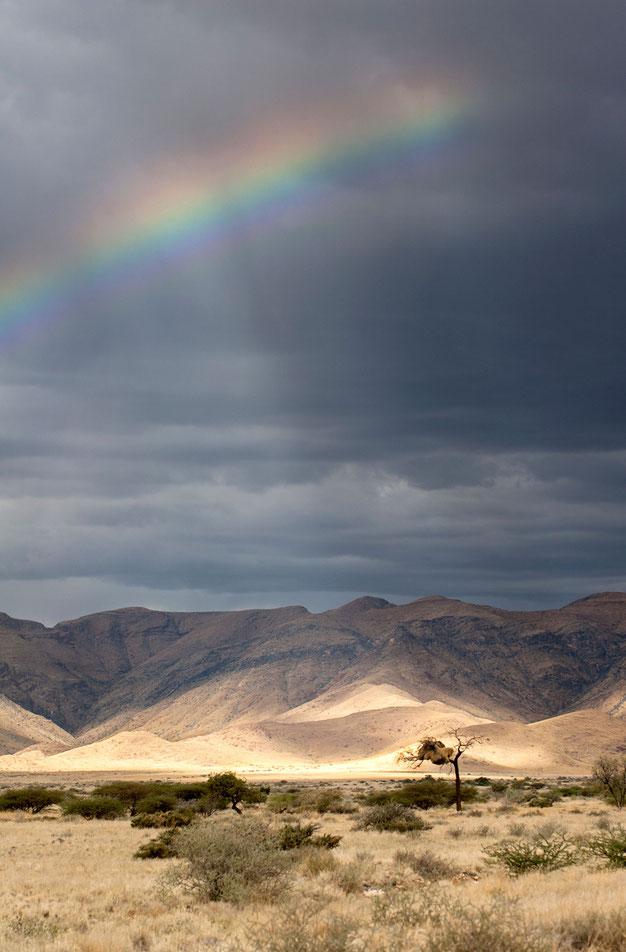 Beautiful rainbow in bushland after a thunderstorm, Namib Naukluft Park, Namibia, 1197x1820px