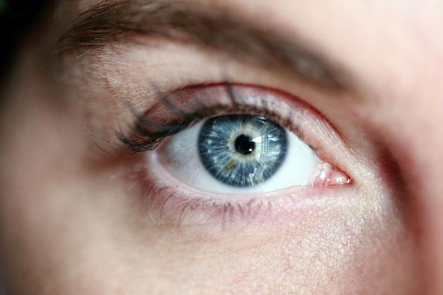 Auge, Hornhaut, Bindehaut